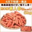 にんじん 人参 無農薬 熊本県産「春人参」 5kg