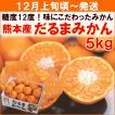 みかん 12月上旬頃から発送・熊本県産「だるまみかん」 正規品5kg