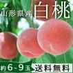 桃 送料無料 山形県産 白桃 約2.5kg(10玉前後)