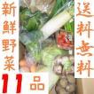 山口・九州産【送料無料】 『新鮮野菜の詰め合わせ11種類』(小松菜・白ねぎ・玉ねぎ・なす・人参他)
