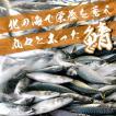 常磐もの・鮮魚・生さば・生サバ 5kg ※水揚げ次第発送(1尾あたり800g〜900gが6尾)