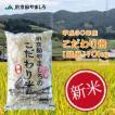 新米 精白米 平成30年産 京都府産 JA京都やましろのこだわり米 10kg ×2袋