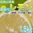【お試し】和歌山県産  訳あり レモン 1.5kg(サイズ不揃い、傷あり)【送料無料】*防腐剤不使用、ノーワックス