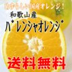 【送料無料】訳あり/バレンシアオレンジ 2.5kg めず...