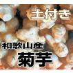 送料無料 和歌山産 菊芋(キクイモ)生 1kg(土付き) テレビで話題のスーパーフード