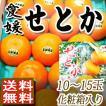 高級柑橘 せとか 愛媛産 みかん 10~15玉化粧箱入り ご贈答 かんきつ類 高級品種 送料無料 訳あり品ではございません