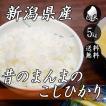 新米 お米 5kg 新潟産 コシヒカリ 昔のまんまのコシヒカリ 5kg×1袋 送料無料 令和2年産 米 白米