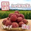 減農薬栽培 じゃがいも < レッドアンデス >  北海道産 じゃがいも  ( L 規格  5 kg)≪ 農家直送 ≫  ようてい山麓ルスツ産  じゃがいも