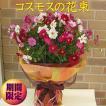 秋らしく思い切ってコスモスだけの花束3780円 期間限定9月16日ー10月31日