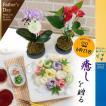 父の日 2020 プレゼント 食べ物 苔玉 マイクロ 胡蝶蘭 ギフト 花 観葉植物 アンスリウム 三輪 そうめん 虹色 ミックス 限定 セット