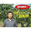 【予約】萩本さんの富有柿 3kg箱(ギフト仕様)【11月下旬から12月下旬ころ】