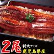 鹿児島県産 大うなぎ 蒲焼 2枚 セット 送料無料 鰻 ウナギ 真空パック ギフト