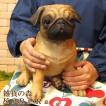 犬の置物 パグ 成犬 大きくてリアルな犬の置物 いぬのフィギア イヌのオブジェ ガーデニング 玄関先 陶器