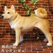 犬の置物 柴犬 大きくてリアルな犬の置物 スタンド 成犬ビッグサイズ いぬのフィギア イヌのオブジェ ガーデニング 玄関先 陶器