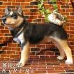 犬の置物 黒柴 リアルな 柴犬のフィギア 成犬ビッグサイズ スタンド いぬのフィギア イヌのオブジェ ガーデニング 玄関先 陶器