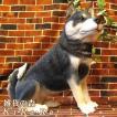 犬の置物 黒柴 リアルな 柴犬のフィギア 成犬 お座り ビッグサイズ いぬのフィギア イヌのオブジェ ガーデニング 玄関先 陶器