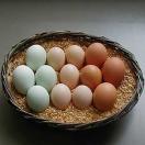 三種鶏卵 「たべくらべ」 :昔懐かし野外放し飼い高級卵の味比べ!