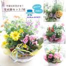 プレゼント 鉢花 寄せ鉢セット 花 誕生日 あすつく 送料無料 セール お花お任せ寄せ鉢セットM