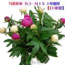 芍薬 花束 母の日限定商品