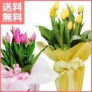 【送料無料】チューリップ鉢植え ピンク/イエロー