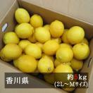 さぬきレモン 約5kg 2L-Mサイズ(約30-50個) 香川県産