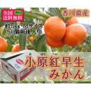 小原紅早生みかん 約5kg Mサイズ(約50個) 香川県産