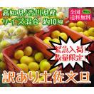 訳あり土佐文旦サイズ混合 約10kg 4L-S 高知県産または香川県産