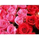 バラ 最上級 国産バラ 10本から 本数 選べる ギフト バラの花束 赤 ピンク