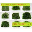 苔盆栽 テラリウム の 苔 選べる こけ お好...