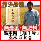 無農薬 玄米 幻の米 「旭1号」 5kg 2016年(平成28年) 熊本産