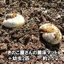 きのこ屋さんの菌床マット カブトムシの幼...