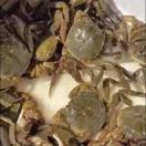 日本の上海蟹 モクズガニ 3匹セット(天然)(冷凍)