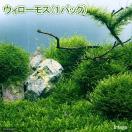 (水草)ウィローモス(無農薬)(1パック...