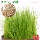 チモシーの種(1袋) 牧草 栽培 家庭菜...
