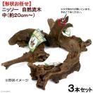 形状お任せ 自然流木 中(約20cm~) 3本セット 関東当日便