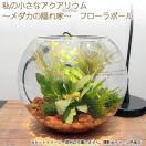 メダカの飼育に!インテリアにもなる、おしゃれな水槽・ガラス製の器・鉢が欲しい!