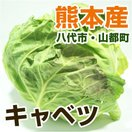 熊本産 キャベツ 1玉 ( 野菜セット と同梱で送料無料  葉もの 野菜 九州 熊本 )
