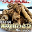 山わさび 北海道産 蝦夷山わさび 1kg 送料無料沖縄は送料別途加算 ホースラディッシュ レホール セール