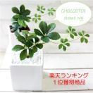 観葉植物 ミニシサスアイビープラント シュガーバイン 造花 インテリア フェイクグリーン