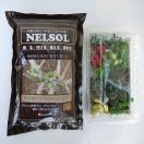 観葉植物/多肉植物切り芽(カット芽)10芽入りパッケージと固まる土(ネルソル)1リットル入りのセット