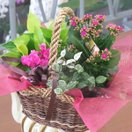 誕生日の花 鉢植え 花 ギフト 寄せ鉢 ギフト プリティーミックス 翌日配達