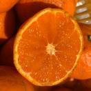 ★愛媛産訳ありみかん3kg×1箱 送料無料 ...