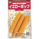 とうもろこし種 ポップコーン イエローポップ 小袋 実咲 サカタのタネ