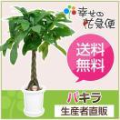 観葉植物 パキラ7号プラスチック鉢 開店祝い 新築祝い
