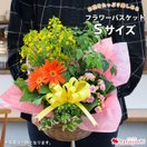 季節のおまかせ花鉢とグリーンの寄せ入れ Sサイズ 鉢植え花 ギフト 花鉢 鉢花 新築祝い フラワーバスケット 画像配信サービス