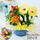 季節のおまかせ花鉢とグリーンの寄せ入れ Mサイズ 鉢植え 花 ギフト 花鉢 誕生日  贈り物 フラワーバスケット 画像配信サービス