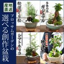 産地直送 ブロッサムガーデンの選べる創作盆栽~苔あそび~松ぼっくり松かガジュマルかシマトネリコか睡蓮木から選べる♪