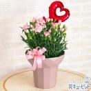 母の日ギフト 花キューピットのカーネーション鉢(ピンク)
