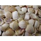 ケーキシェル 約2.0~2.5cm/100g 貝 貝殻 シェル 二枚貝 ブライダル ウェルカムボード ハンドメイド フレーム 海 ストラップ