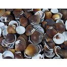 デフロラータ 約 2.0~4.0cm/500g 貝 貝殻 シェル 二枚貝 ブライダル ウェルカムボード ハンドメイド フレーム 海 ストラップ